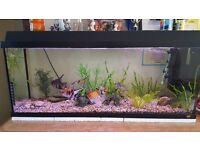 Juwel 3ft fish tank