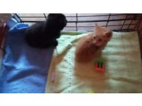 Beautiful playful kittens looking for loving homes