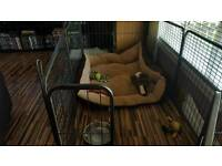 Dog cage puppy pen