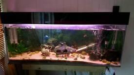 4ft fish tank set up