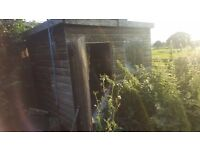 Garden shed 6ft x 4ft buyer dismantles and removes, bargain.