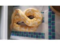 SOLD High contrast albino royal python