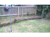 FREE - Couple of dead trees - Ideal for wood burners etc