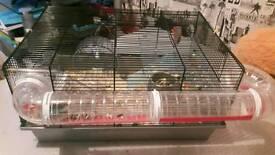 Beautiful dwarf roborovski hamster&Full set up for sale