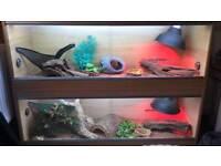 bearded dragon full vivarium set up