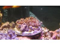 various colours ans shapes and sizes soft corals