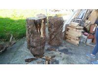 wanted cherry oak elm walnut yew log tree trunk wood