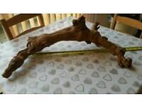 Drift wood reptile branch