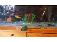 3ft fish tank n mbuna fish