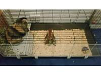 8 month old male rabbit with indoor cage