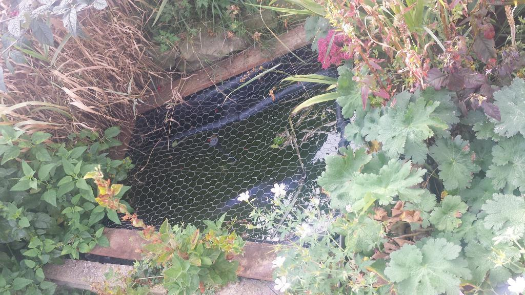 Pond Tub In Rotherham South Yorkshire Gumtree