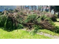 Free logs/branches for uplift
