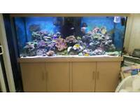 Fishtank 72x24x29 complete will sell fish and corals separately