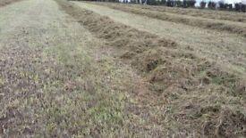 2016 haylage large round bales