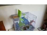 cute hamster with cage, food, bedding,and more