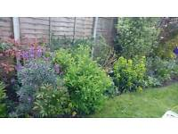 Lady Gardener - gardening services to make your garden beautiful