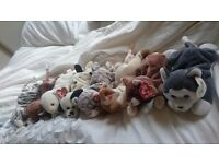 Beanie baby selection