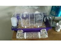 Two drawf hamsters with purple cage with accessories.