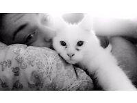 Finn the cat :)