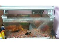 Fish tank with light , 3 fish