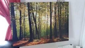 Woodland canvas