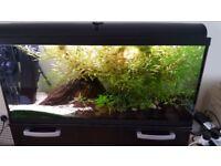 Fish tank 170 l