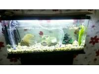 Fishh tank