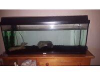 Juwel Fish Tank.