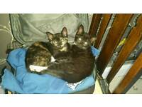 2 lovely kittens for sale