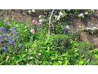 Creedy Garden Services