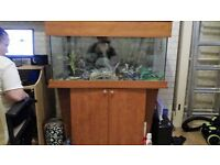 3ft 3in fish tank ( full set up)