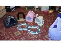 Selection of kitten accessories