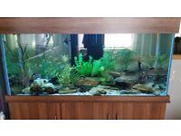 Seabray 5 foot fish tank/aquarium comes complete