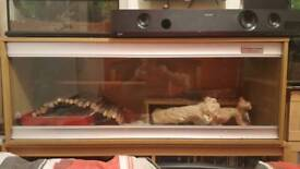 4ft vivexotic vivarium - bearded dragon