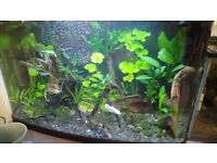 Tropical fish tank plants