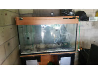 large Fish Tank with stand and t5 lighting