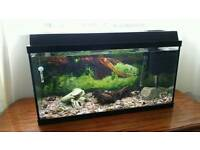 Juwel rekord 800 aquarium fish tank,Fluval filter,heater ornaments £50