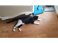 Two 6 mth old Female Kittens