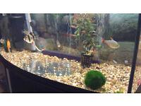 Aquael 90L Tropical/Cold Water Fish tank Aquarium with Cabinet, Accessories and Fish