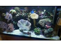Full Marine set up all fish,corals and live rock