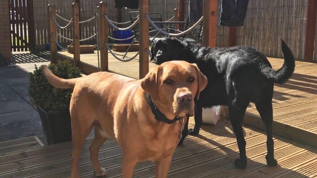 Dog Carer/adoption needed Monday to Friday