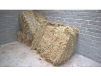 Hay Bales Square, Excellent Quality, Dunfermline area. Suitable for Equine, Sheep, Rabbit, Guinea.