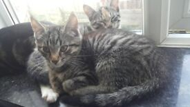 2 beautiful kittens ready to leave home