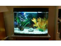 40 litre PANARAMA Fish Tank