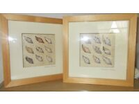 shell collection frames x 2