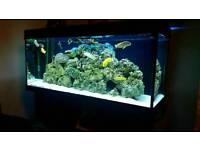 Juwel rio 240 fishtank fish tank cichlids
