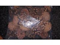 Bag of large pine cones