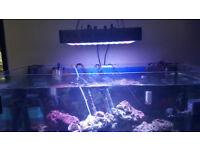 aquarium marine 250 liters