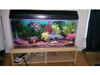 Fish tank for sale 3ftx1.5ftx1ft £100 ono