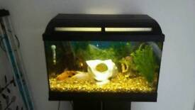Attractive fish tank with stand pluss extras